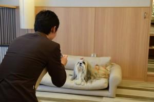 愛犬との写真撮影