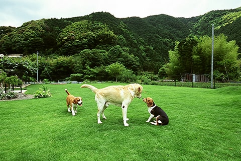 せせらぎの宿 紅竹(くれたけ) 静岡県